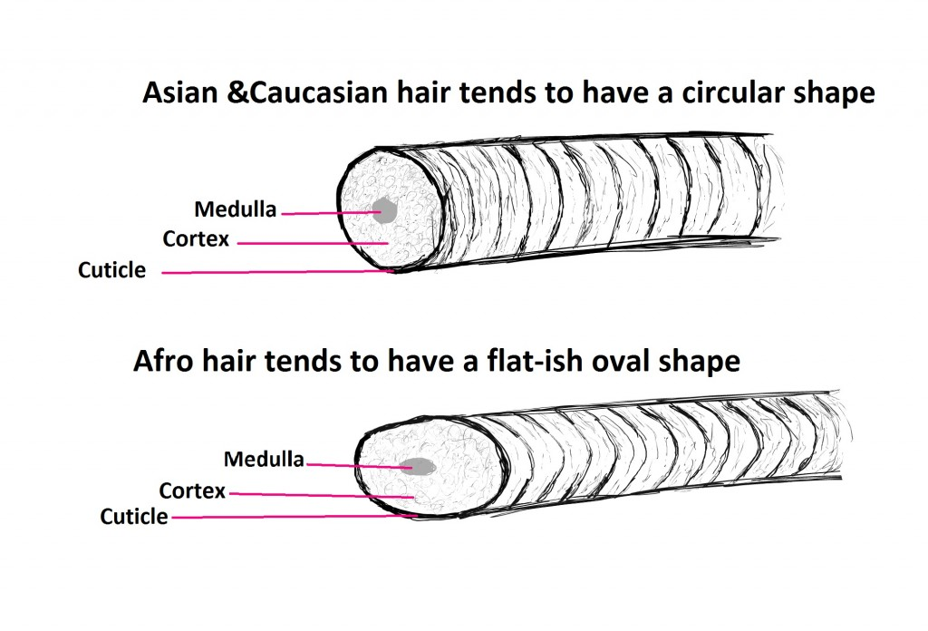 hair strand shape